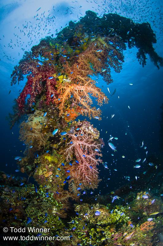 Colorful soft coral on a life boat davit. Fujikawa Maru, Truk Lagoon