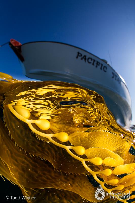 Giant Kelp and Ship